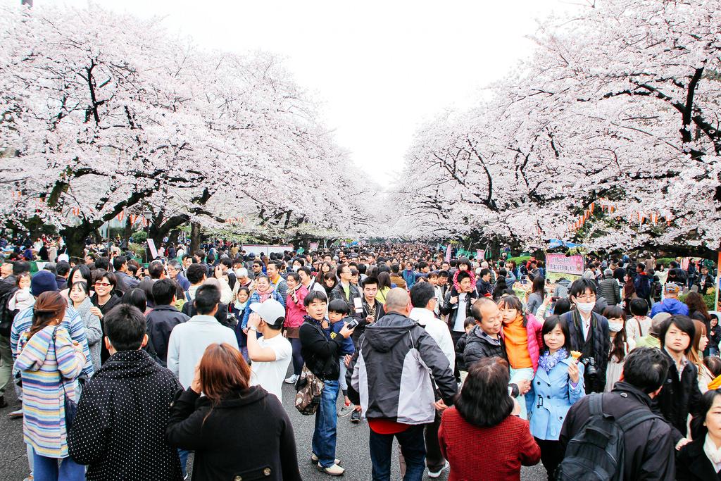 photo credit: Hanami at Ueno Park 2016 via photopin (license)